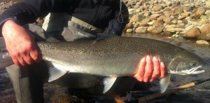 Pacific Angler customer with a beautiful steelhead caught in the Lower Mainland.