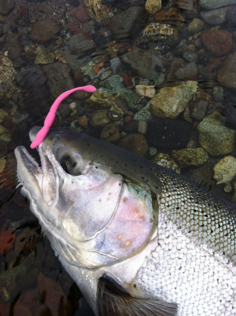 pink worm steelhead