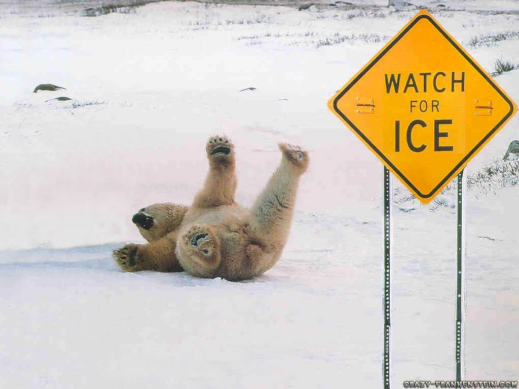 polar-bear-slipping-on-ice-funny-sing-wallpaper