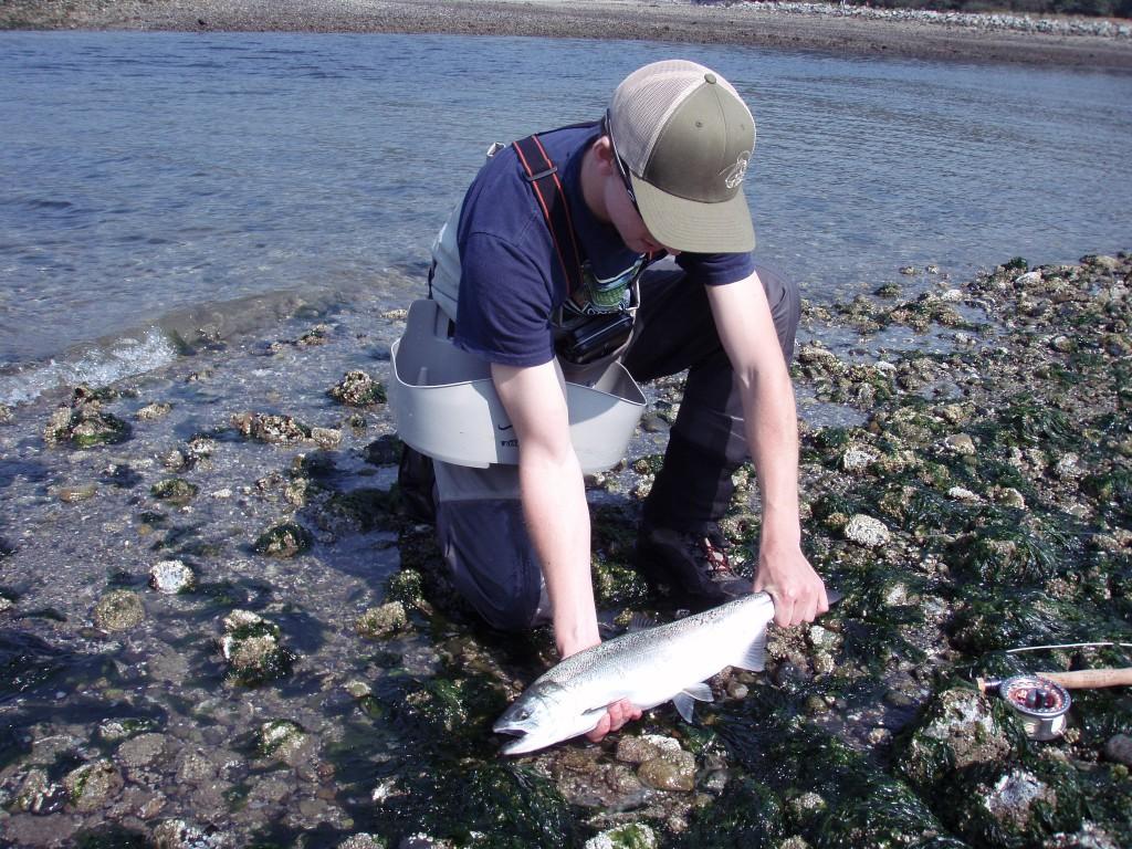 Vancouver Coho Salmon