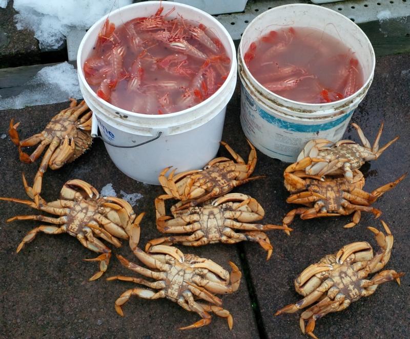 Crab_Prawn Haul_Dec 2013