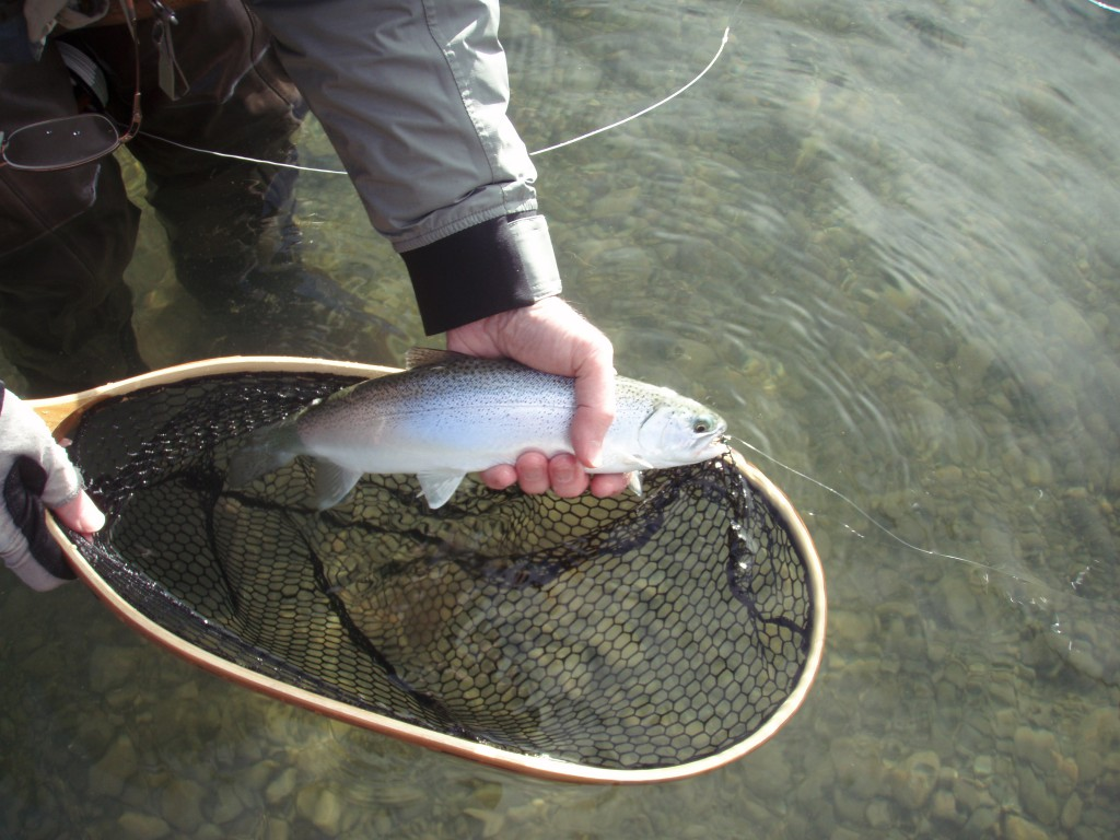 A nice cutthroat landed last season.