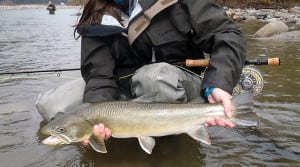 Fly Fishing Egg Patterns Vancouver Fishing Courses