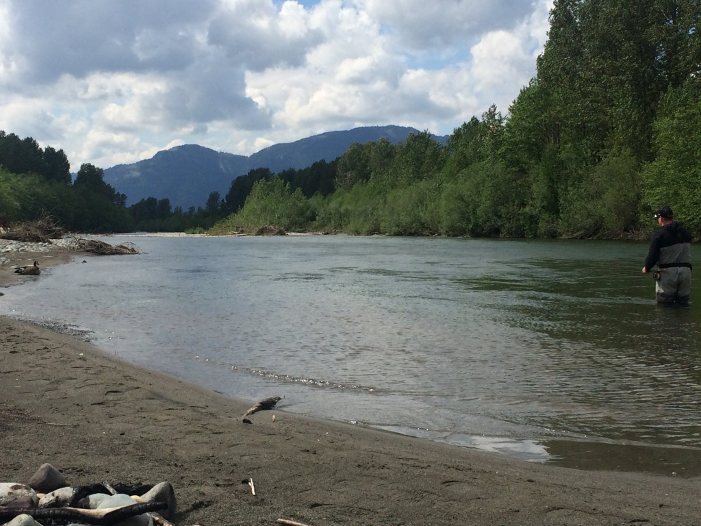 Fly Fishing the Chilliwack.