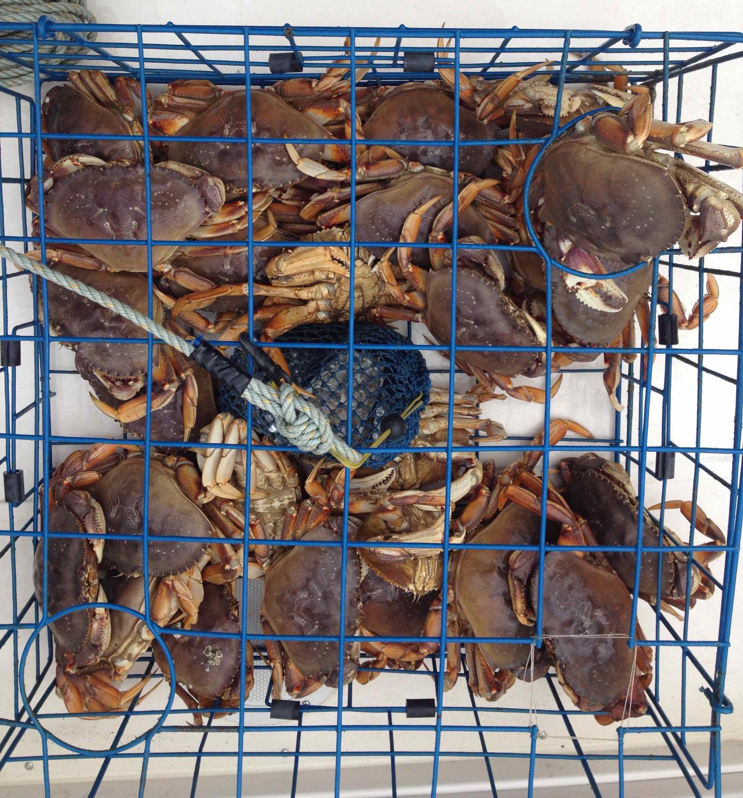 EM crab fishing reduced