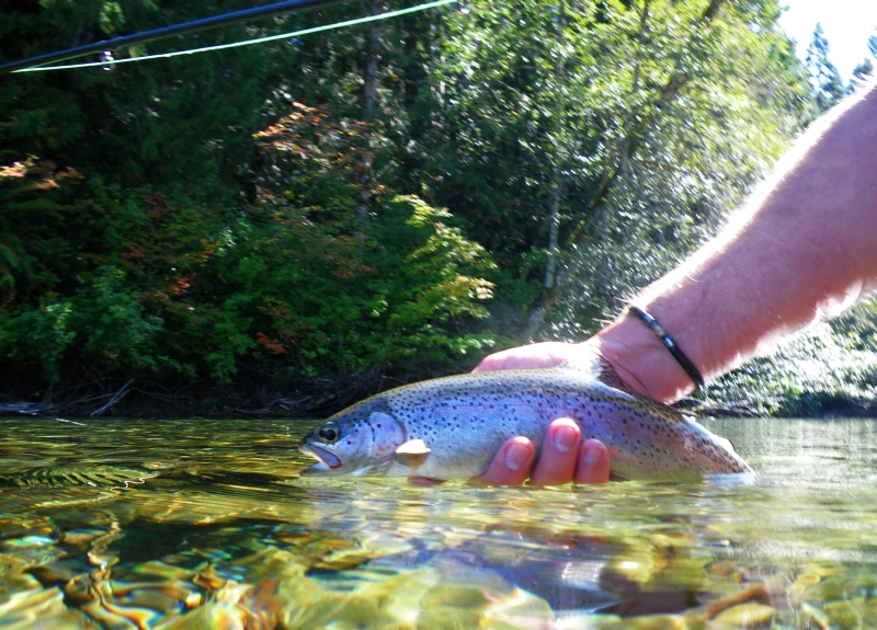Pacific_Angler_Introduction_To_Fly_Fishing_Trout_Streams