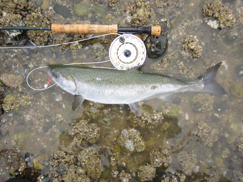 Beach_Salmon_Fishing_Vancouver