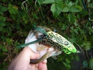 Bass_Fishing_Pacific_Angler