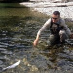 Skagit_River_Rainbow_Trout