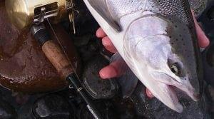 course-fall-salmon-river-fishing-01