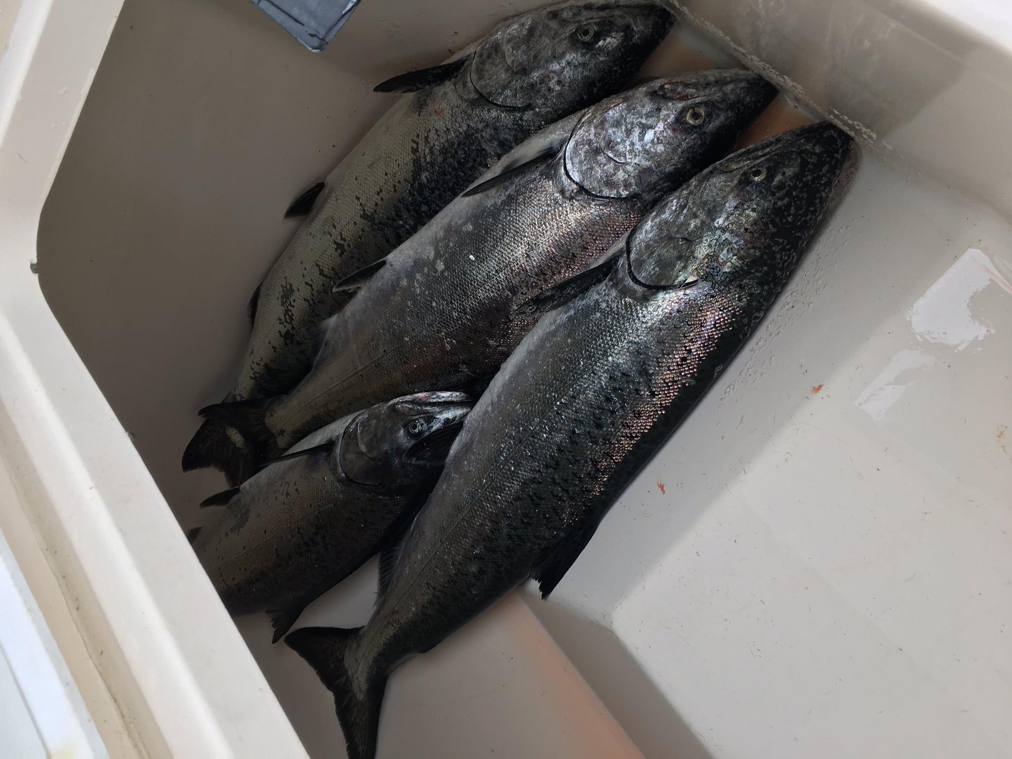 Vancouver_Fishing_Trips