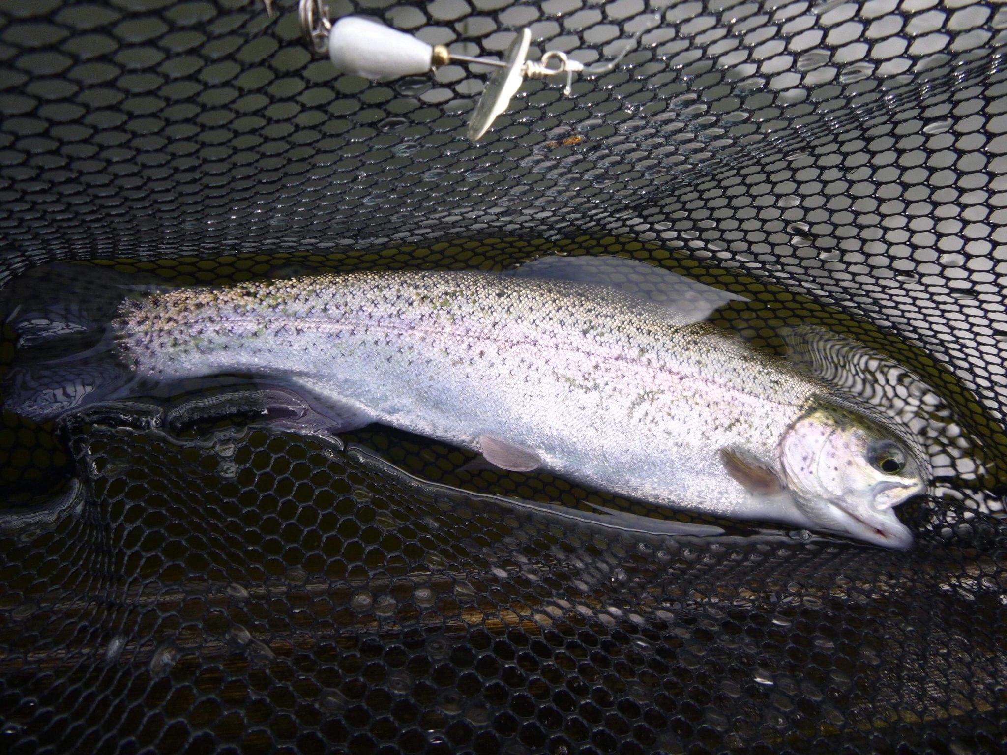 Lower_Mainland_Lake_Fishing