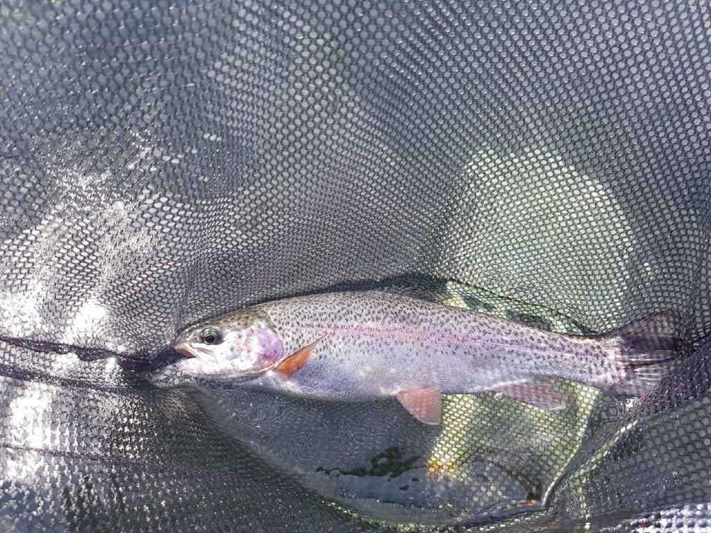 Lake_Fishing_Pacific_Angler