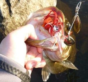 Vancouver_Bass_Fishing