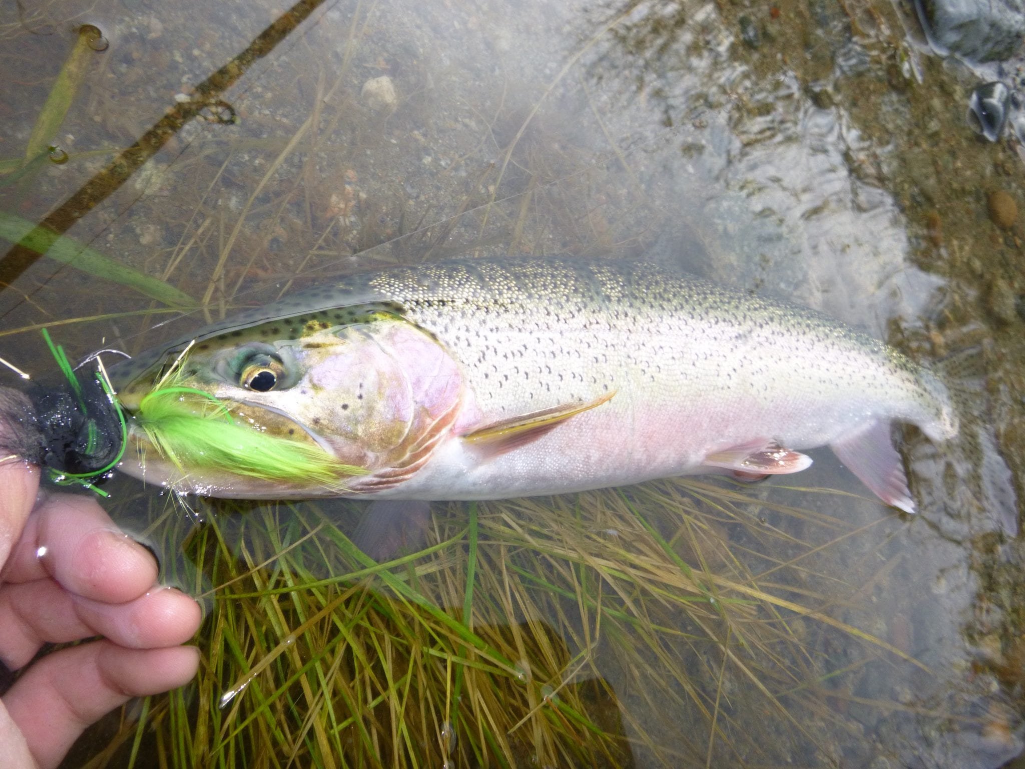 Stave_River_Trout_Fishing