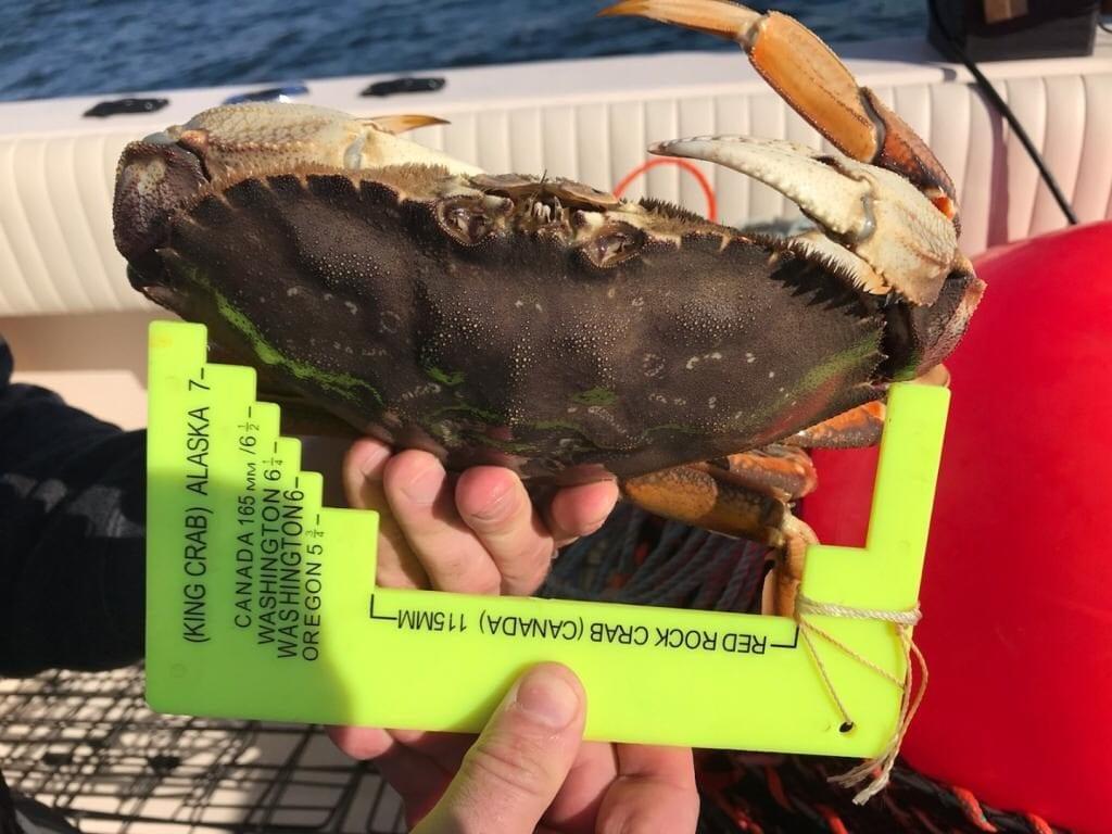 Vancouver_Crabbing